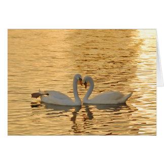 Cartão Reunião do casal da cisne na fotografia do por do