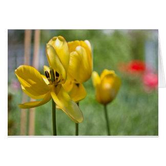 Cartão Revelação das tulipas