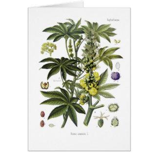 Cartão Ricinus communis (planta de óleo de rícino)