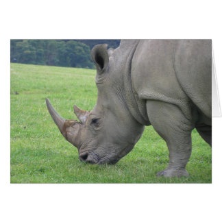 Cartão Rinoceronte