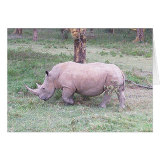 Cartão Rinoceronte branco
