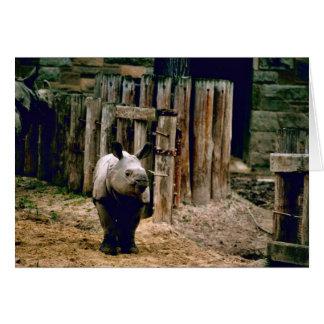 Cartão Rinoceronte indiano