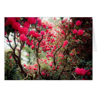 Cartão Rododendro gigante