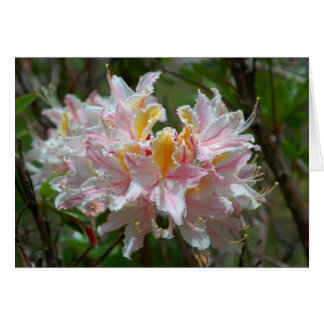 Cartão Rododendro Occidentale
