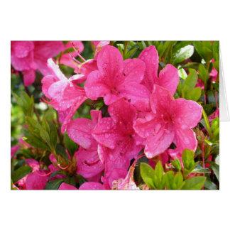 Cartão Rododendros cor-de-rosa