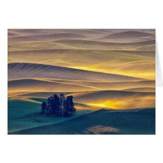 Cartão Rolling Hills do trigo no nascer do sol   WA