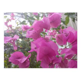 cartão romântico com folhas magentas cartão postal