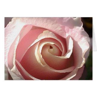 Cartão Rosa bonito do rosa