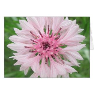 Cartão - rosa/botão solteiro cor-de-rosa