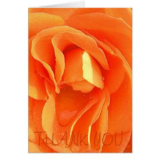 Cartão Rosa da laranja, OBRIGADO