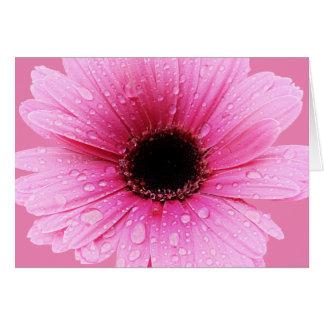 Cartão Rosa da margarida com pingos de chuva