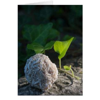 Cartão Rosa de deserto 141 das pedras |