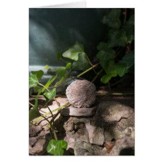 Cartão Rosa de deserto 143 das pedras |