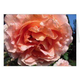 Cartão Rosa do rosa