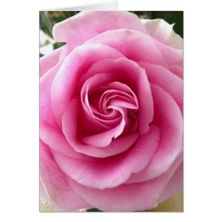 Cartão Rosa do rosa bonito