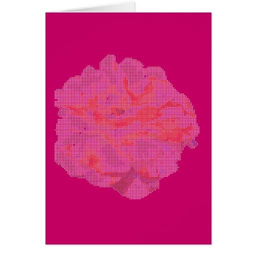 Cartão -- Rosa do rosa no pequeno ponto