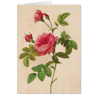 Cartão Rosa Inermis, Pierre Joseph Redouté
