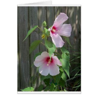 Cartão Rosa no duo cor-de-rosa de flores do hibiscus
