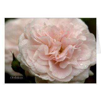 Cartão Rosa pálido aumentou com pingos de chuva