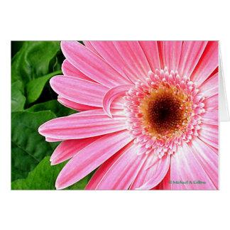 Cartão Rosa puro