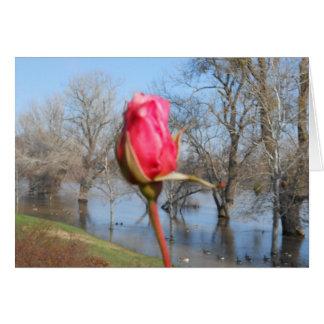 Cartão Rosa vermelha