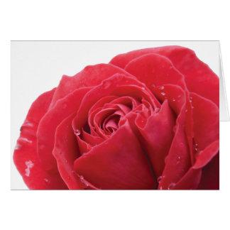 Cartão Rosa vermelha com gotas de água