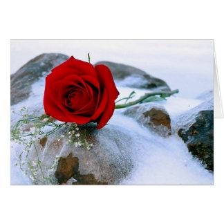 Cartão Rosa vermelha dentro neva
