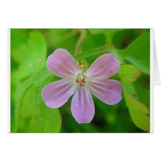 Cartão Rosa Weis às riscas Cegonha Bico Flor