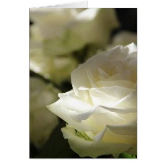 Cartão Rosas brancos