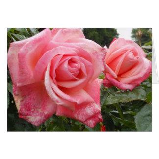 Cartão Rosas cor-de-rosa, jardim botânico de Belfast, NI