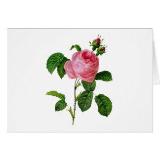 Cartão Rosas cor-de-rosa por Pierre-Joseph Redoute