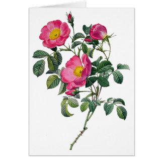 Cartão Rosas de Pierre Joseph Redoute
