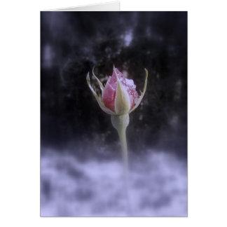 Cartão rosebud na neve 3, matizada