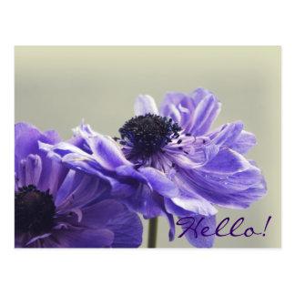 Cartão roxo da foto da anêmona