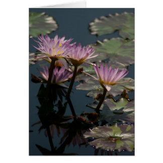 Cartão roxo de Lotus Waterlilies