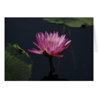 Cartão roxo de Lotus Waterlily