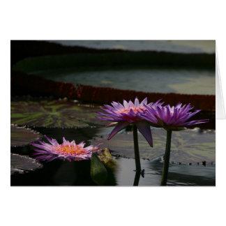 Cartão roxo de Waterlily Waterlilies Lotus