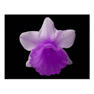Cartão roxo do Daffodil do gotejamento