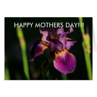 Cartão roxo do dia das mães do close up da íris
