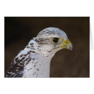 Cartão Rusticolus de Falco
