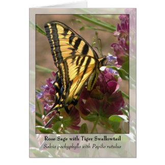 Cartão Sábio cor-de-rosa com tigre Swallowtail - Notecard