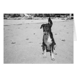 Cartão salgado do ~ do cão