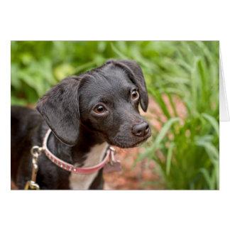 Cartão Salvamento Delilah do filhote de cachorro da libra