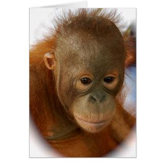 Cartão Salvar orangotango da extinção