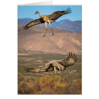 Cartão Sandhill Cranes em vôo