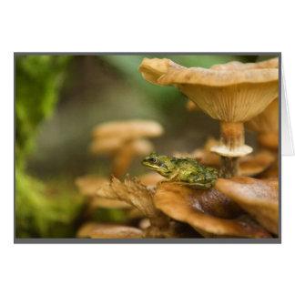 Cartão Sapo em cogumelos
