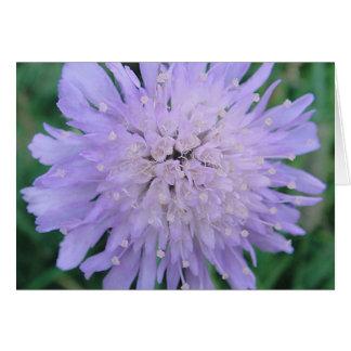 Cartão Scabiosablüte, em branco, gestaltbar