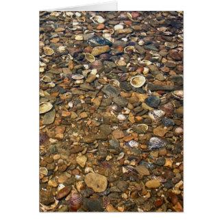 Cartão Seashells na angra clara