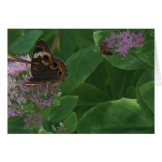 Cartão Sedum, borboleta & abelha