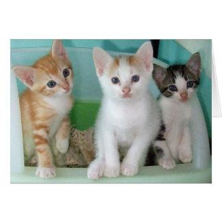 Cartão Seis gatinhos semanas de idade que são bonitos